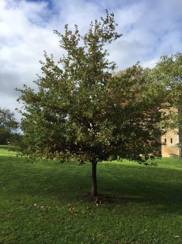 chene 10 ans parc jardin condemine