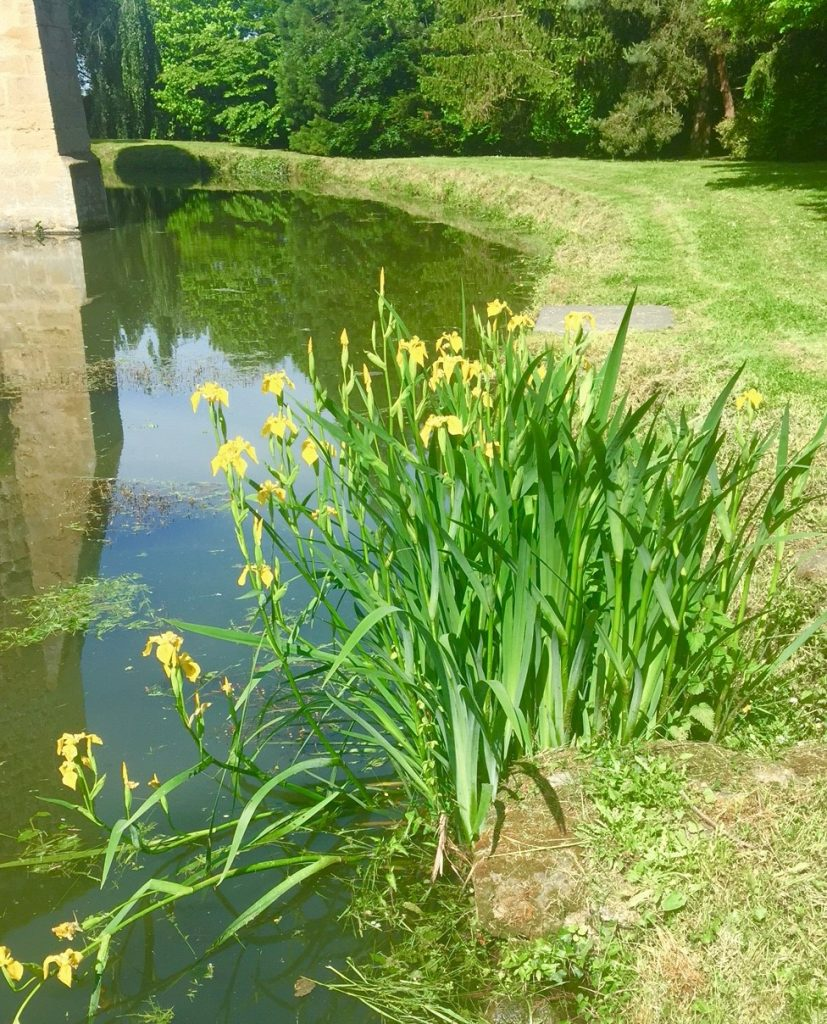 iris Condemine parc jardin